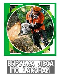 заявление на вырубку дерева образец